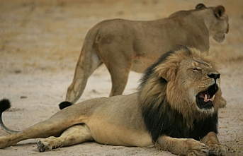 Visitors throng world's 3rd lion park in Istanbul