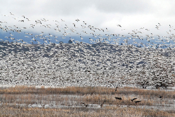 U.S. bird species dying out amid development - report
