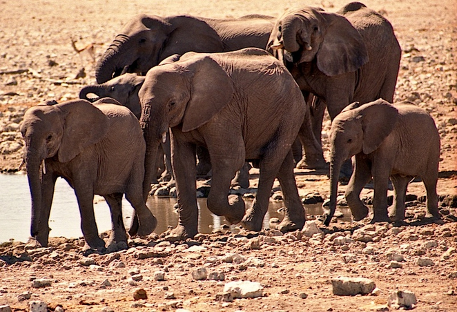 Bomb-sniffing elephants trained in South Africa