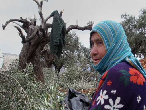 Jewish settlers uproot 300 olive saplings in W. Bank