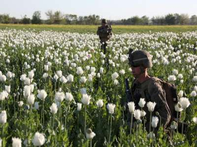 Afghan poppy cultivation hits new high