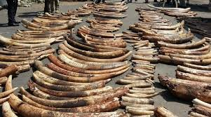 Prison or stiff fines for ivory smugglers in Kenya