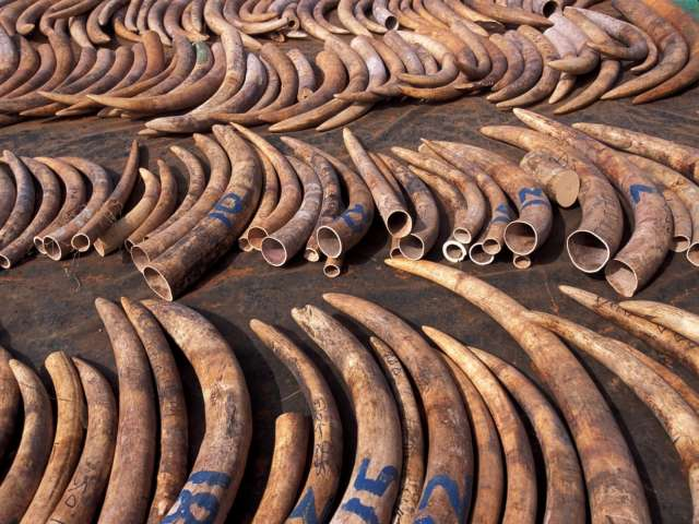 Tanzania calls for int'l ban on ivory, rhino trade