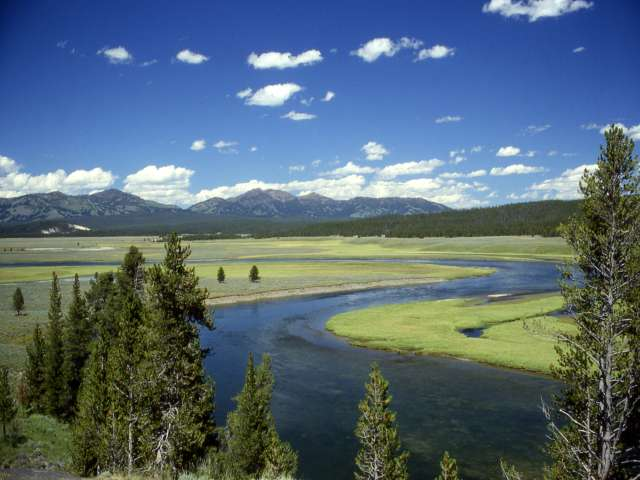 Native American tribe may seek to hunt bison inside Yellowstone