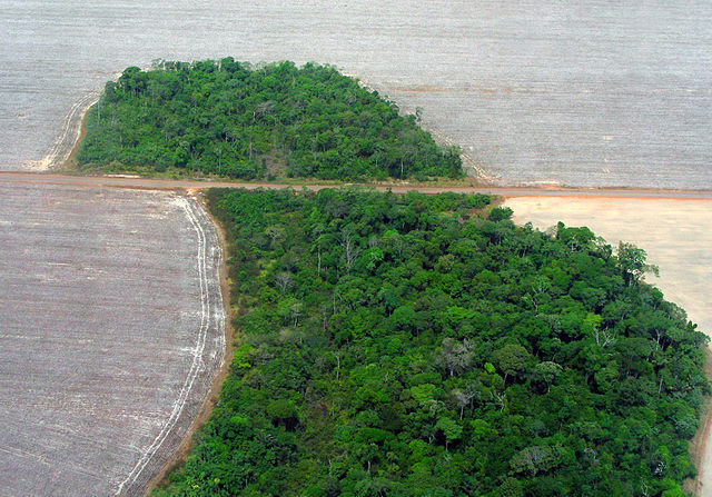 Four indigenous environmental activists killed in Peru