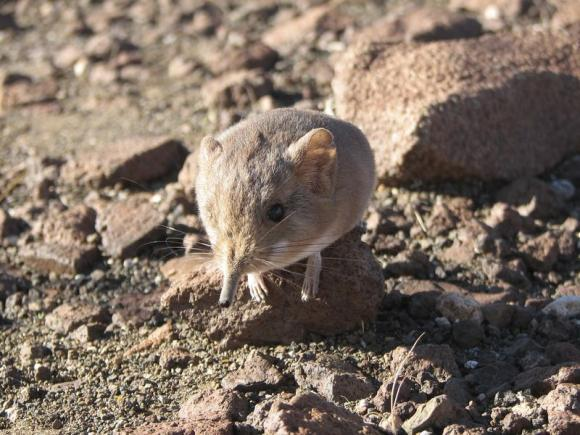 Scientists discover 'elephant-mouse' species