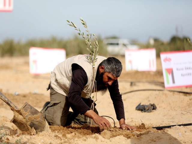 Gazans plant olive saplings for Turkey mine victims