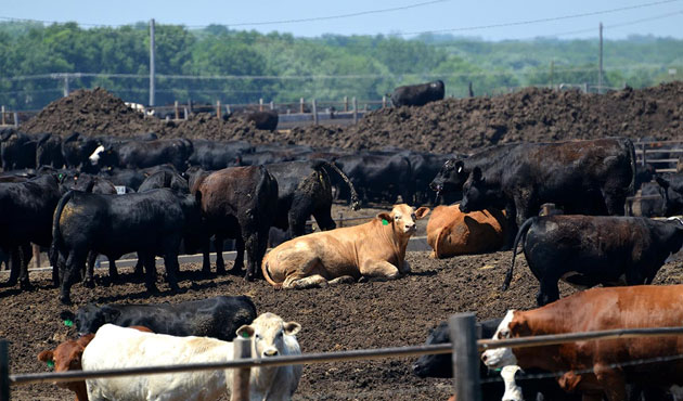 Canada confirms case of mad cow disease, first since 2011