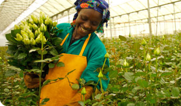 Hydroponic agriculture turns Kenyan homes into gardens