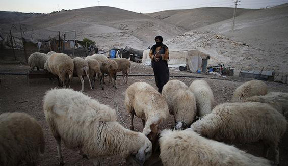 Bedouin lose homes as Israel extends occupation