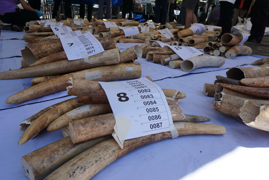 Kenya burns 'largest ever' ivory stockpile