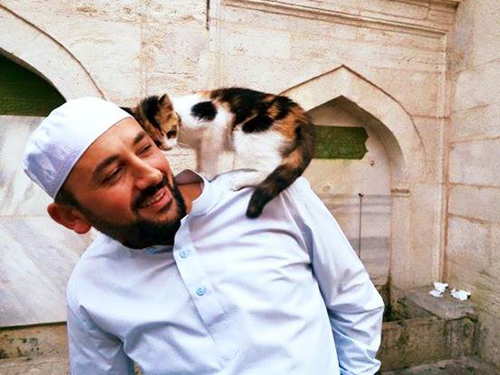 Istanbul imam opens mosque door for homeless cats