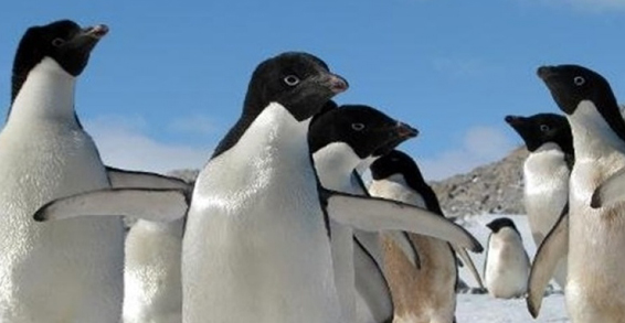 Iceberg grounds thousands of Antartica penguins