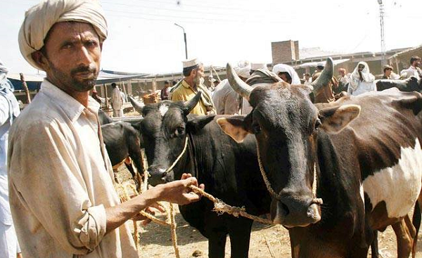 India cracks down on Muslim butchers over cow law
