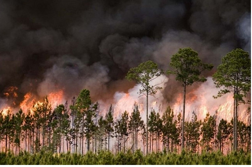 Florida declares state of emergency because of wildfires