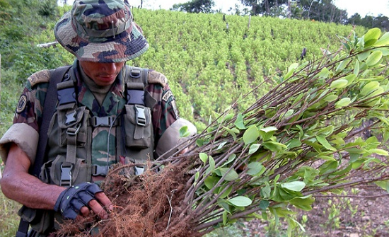 Colombia forces struggle to root out coca