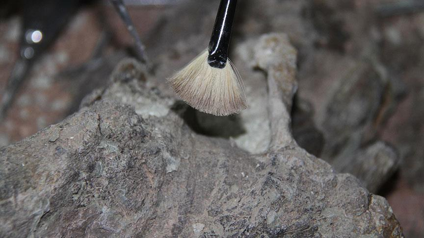 Researchers find oldest human remains in Morocco