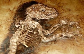 Fossil found in Turkey reveals 20M-year-old predator