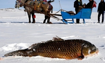 Turkey: Eskimo-style fisher hooks season's biggest fish