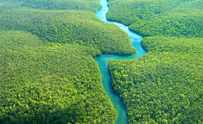 Evidence grows of rainforest resilience to global warming