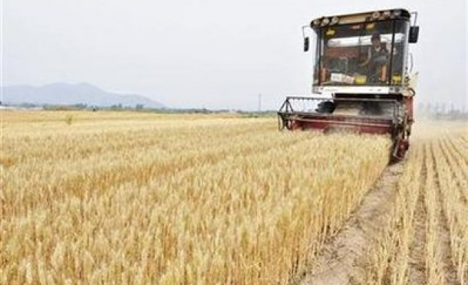 Rain arrives too late for ailing Black Sea crops; yields fall