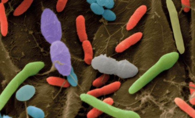 Gut bacteria picky about what we eat: study