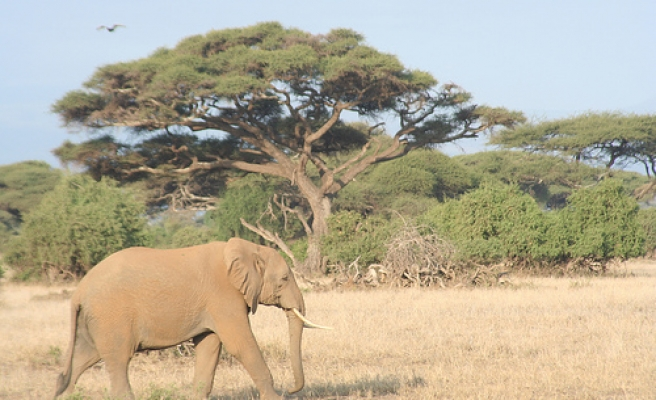 US crushes tons of illegal ivory
