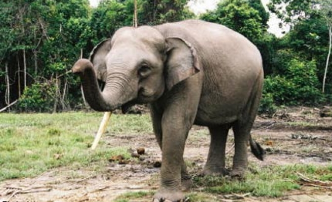 Elephant poaching on rise in C.African Republic