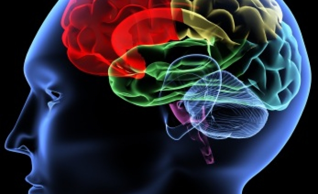 Turkish scientist discovers method for calculating brain volume