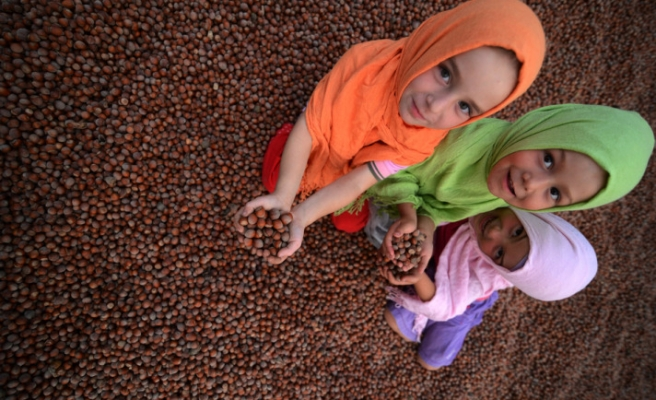 Turkish hazelnut export sales hit record high in 2014
