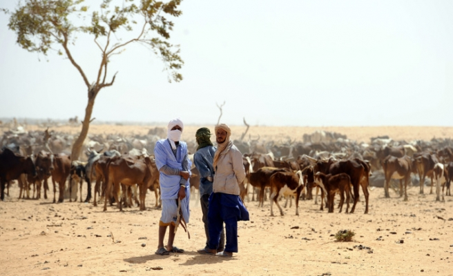 Malian refugees: Our animals on the verge of perishing