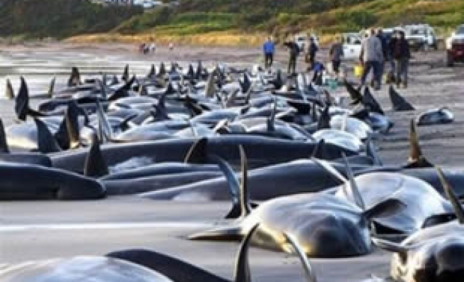 Sea Shepherd activists call for Navy after 'ramming'