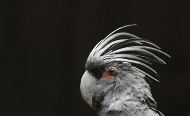 Bird brains can crack nut trading game with self-control: study