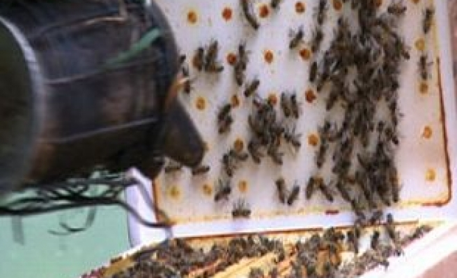 EU set to impose ban on the use of insecticides