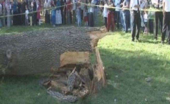 One dead as tree falls on picnic site in İstanbul