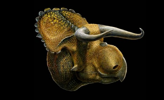 Big-nosed dinosaur fossil discovered