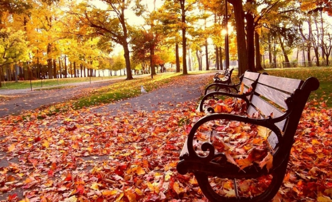 Why do leaves turn yellow in autumn?