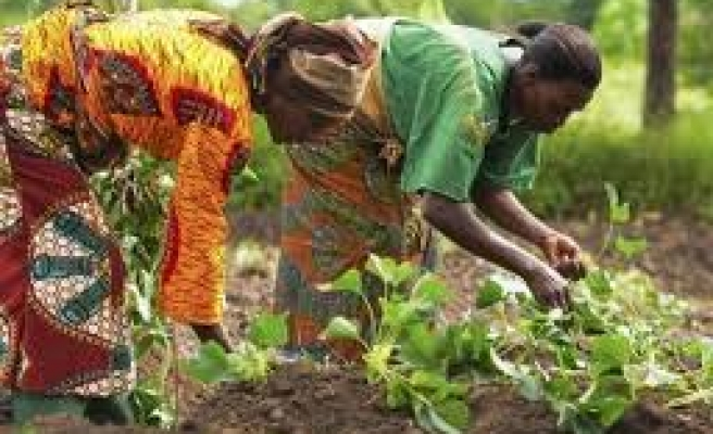 Ethiopia eyes to earn $371mn from horticulture exports
