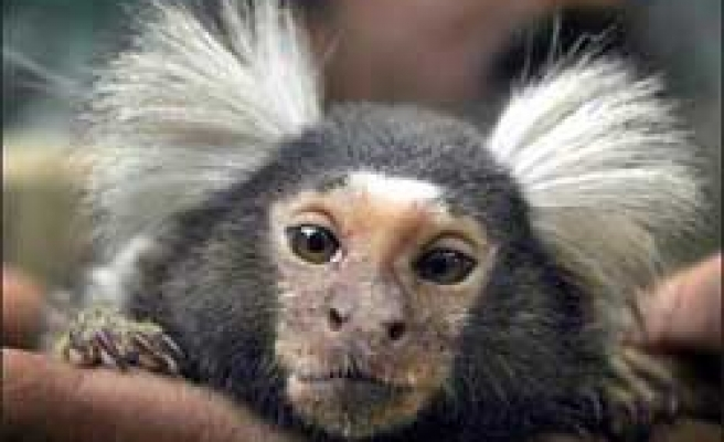 Man smuggles monkey into NYC airport