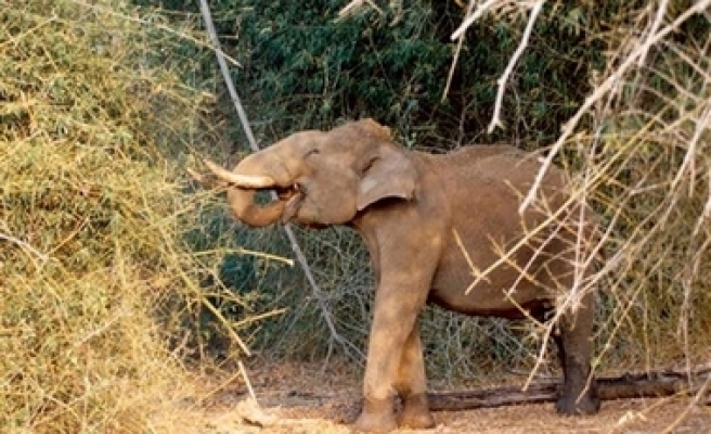 Elephants in India get 'ID cards'