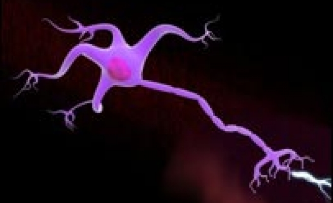 Nerve cell stretchiness uncovered