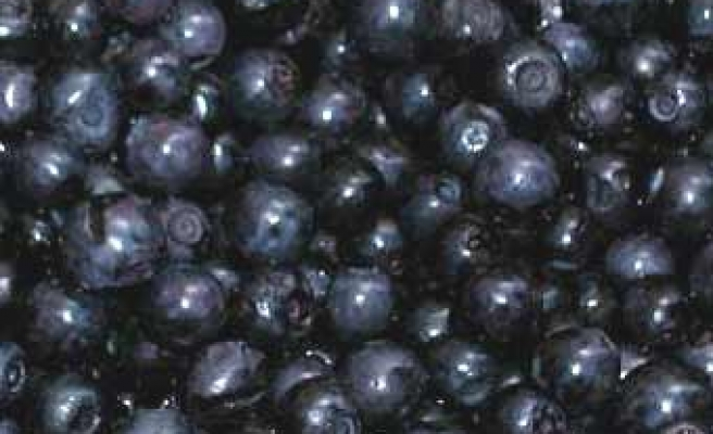 Darker fruits could fight cancer