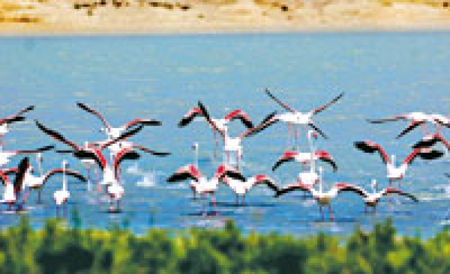 Turkey is bird-richest country in Europe, says Ecologyst