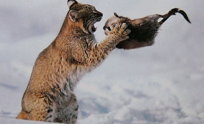 Catch! Nature's killers hunting preys / PHOTO