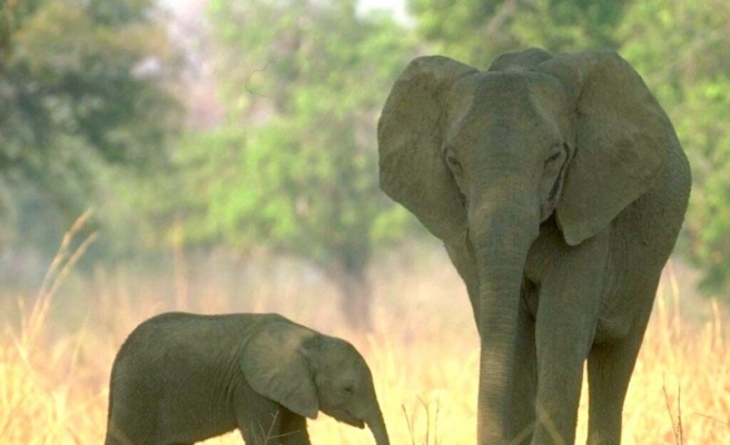 Elephants on rampage in Andhra, 3 killed