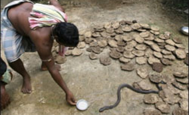 One snake for two people in Indian village