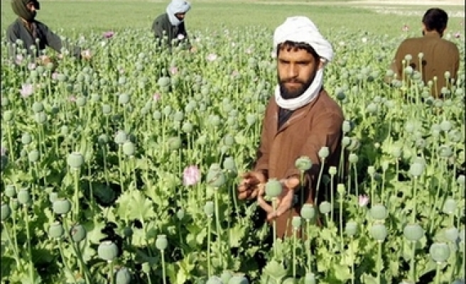 'UK war on Afghan drugs 'complete failure'