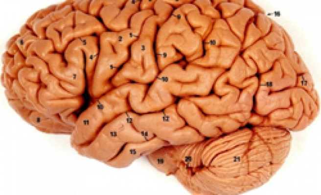 Human brain learns best at night