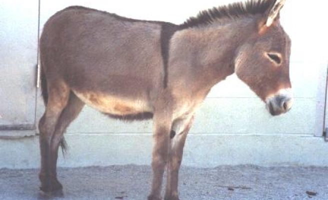 Gumtree bans donkey sales in S.Africa over skin trade