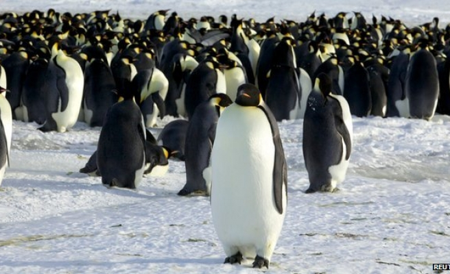 Global warming a threat to emperor penguins